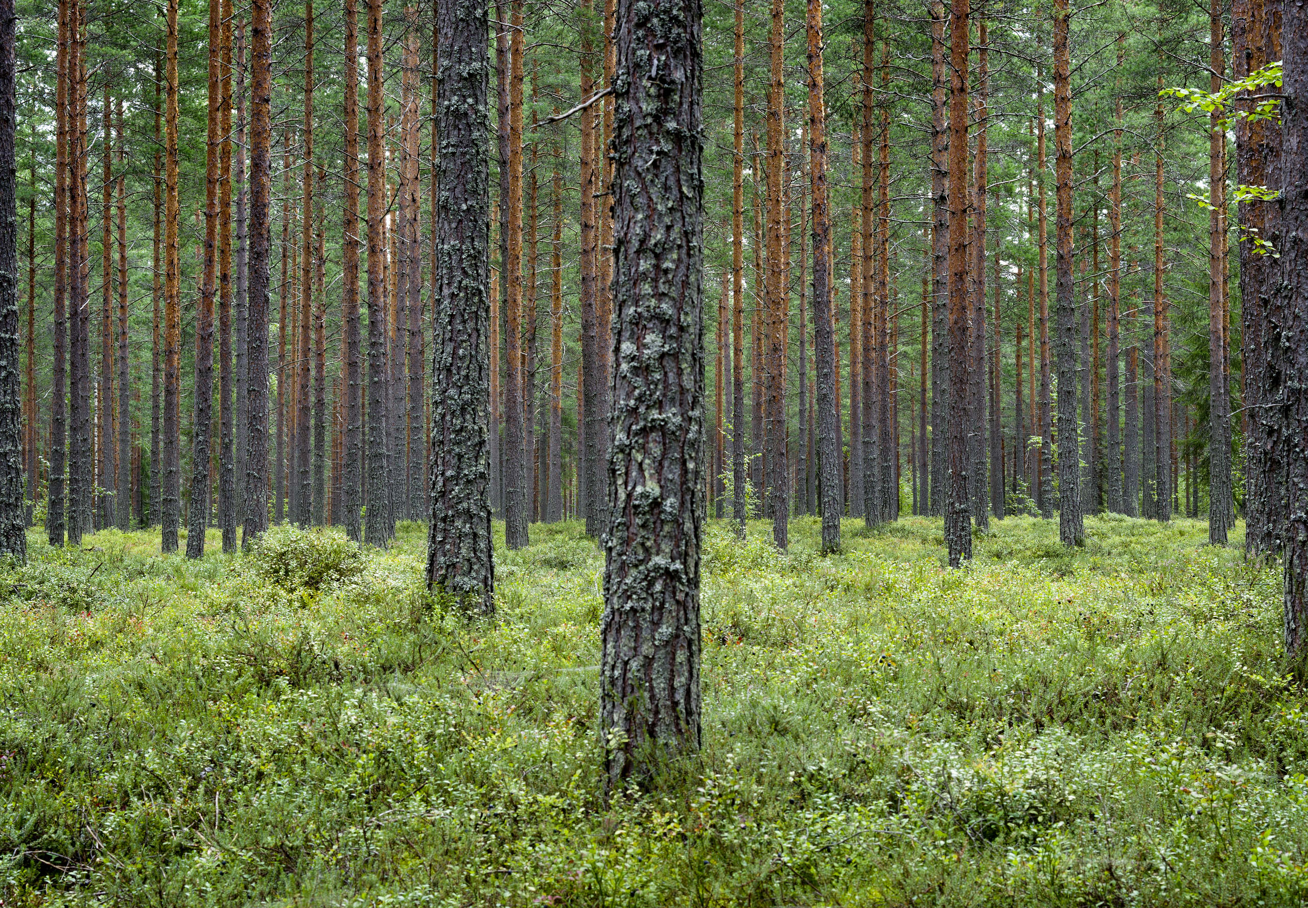 Forest Resources and Raw Material